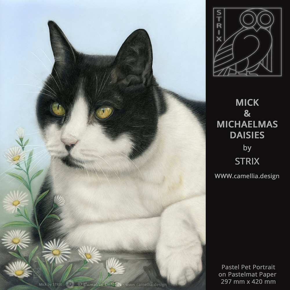 MICK and MICHAELMAS DAISIES | pastel cat portrait by STRIX