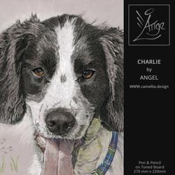 CHARLIE-Spaniel-mixed-medial-pet-portrai