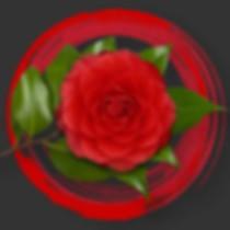 CAMELLIA-DESIGN-red-circle