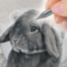 Graphite-pet-portrait-commission-from-CA