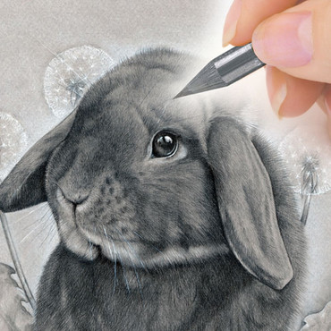 Graphite pet portrait commission from CAMELLIA DESIGN
