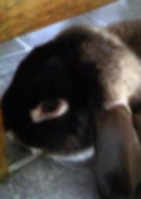 Bunny-photo.jpg