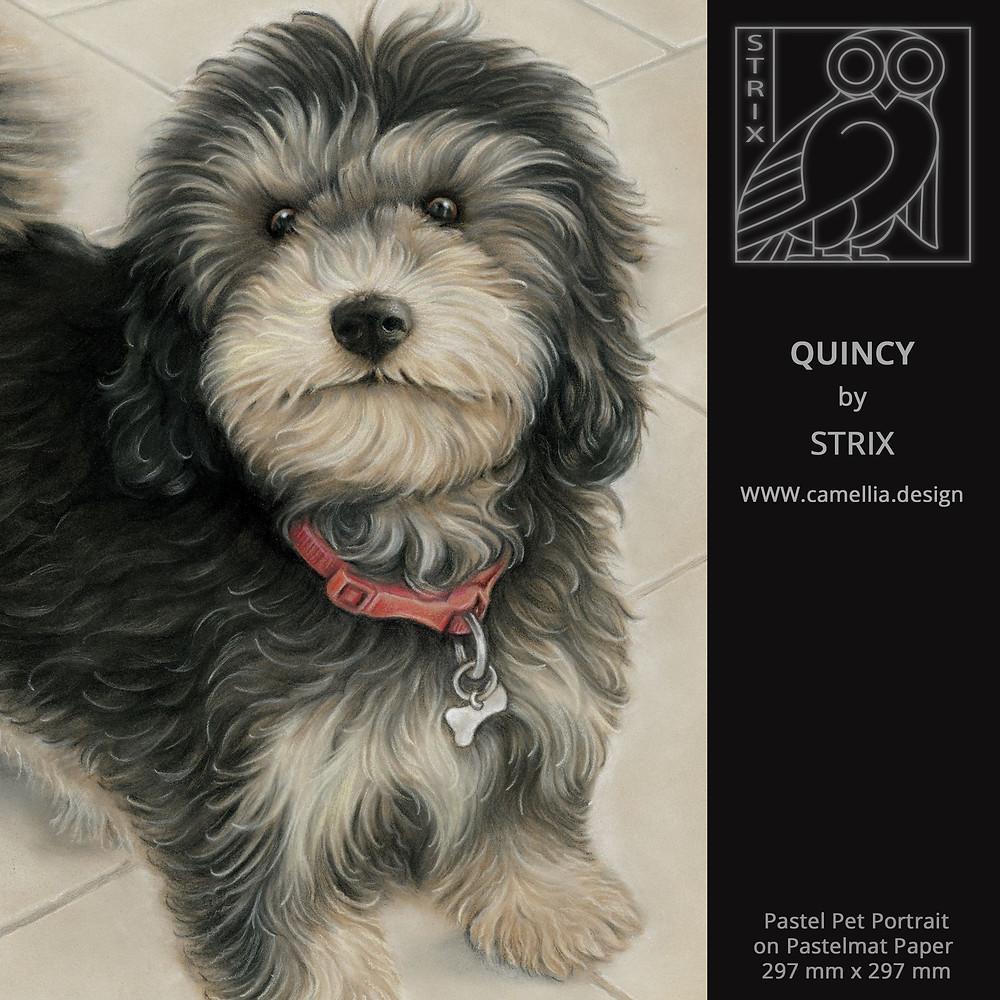QUINCY   Pastel Dog Portrait by STRIX