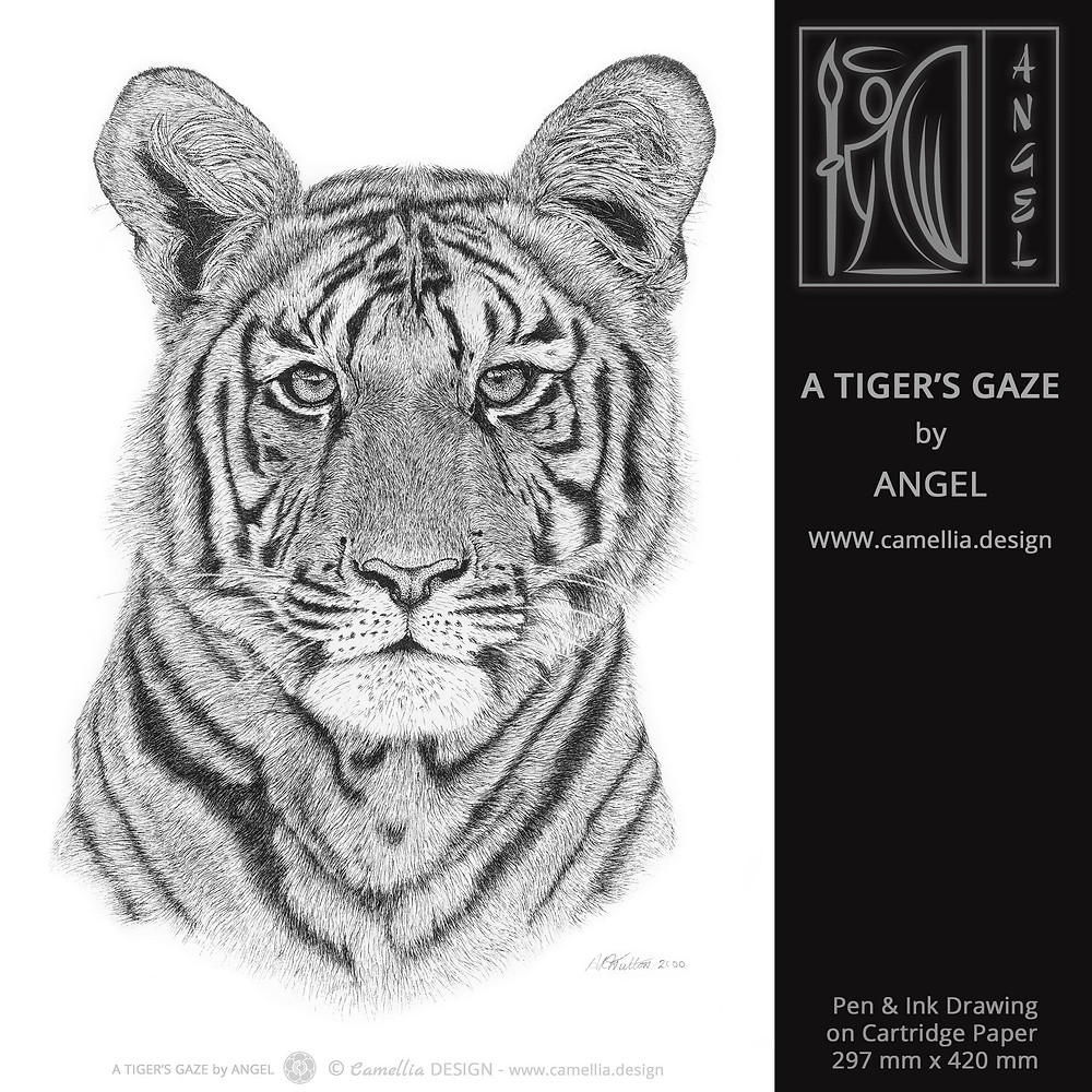 A TIGER'S GAZE | Pen and Ink Drawing by ANGEL