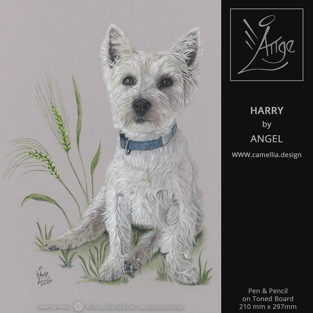 HARRY | West Highland Terrier portrait |artist ANGEL