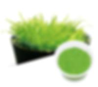 09 Utricularia graminifolia.jpg