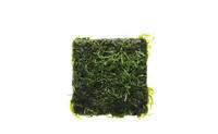 Taxiphyllum sp 'spiky moss' mat.jpg