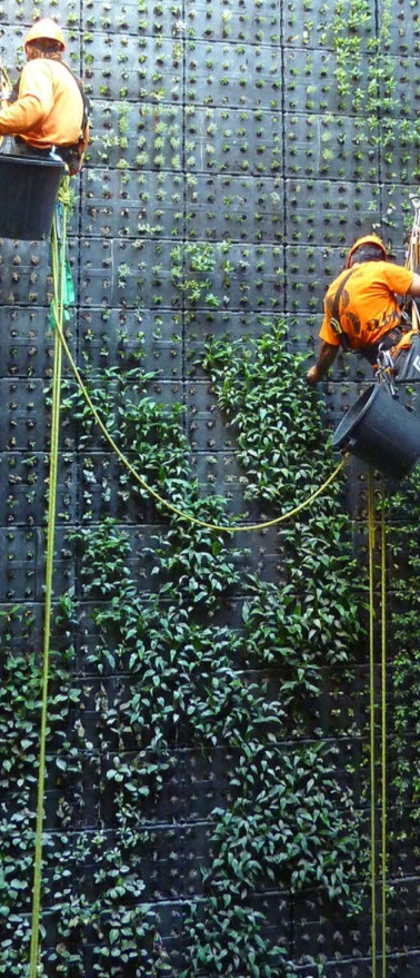 GREENWALLS DESIGN AND BUILDING_03.jpg