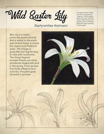Wild Easter Lily Poster