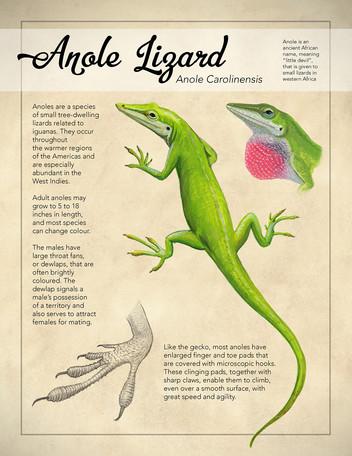 Anole Lizard poster