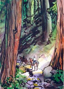 SequoiaTrail.jpg