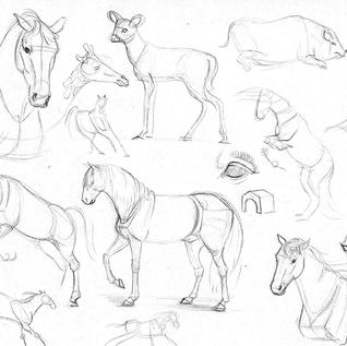Equines and other animals