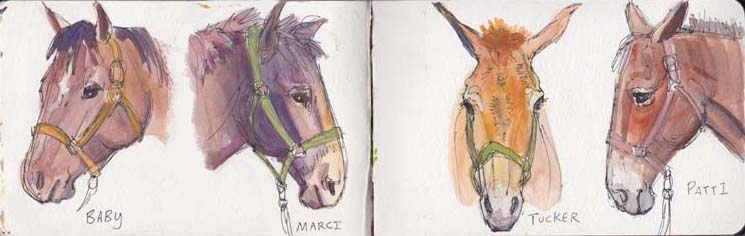 Lead Mare and Stock