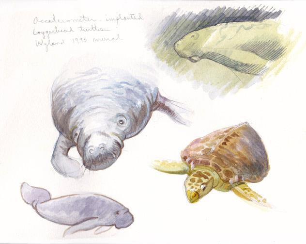 Mote Marine Sea Creatures