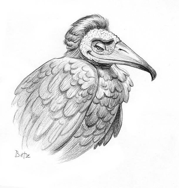 VultureWEB.jpg
