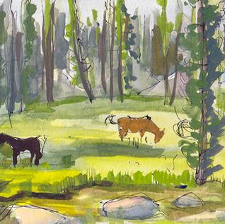 Backcountry_Meadow_WEB.jpg