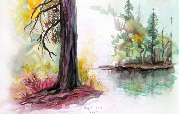 Idyllwild Trees