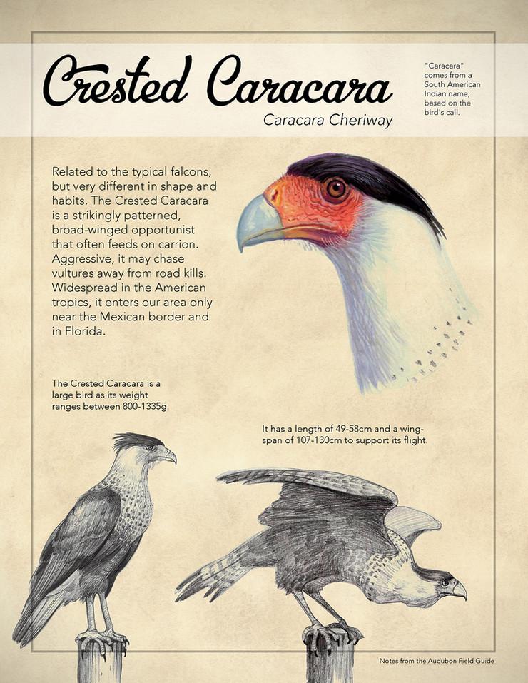 Caracara Poster