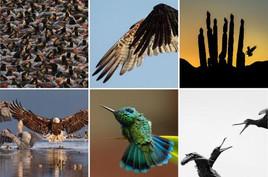 AudubonPhoto.jpg