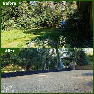 tree removal backyard timonium
