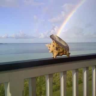 Conch Rainbow