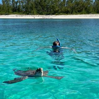 Turtle swim.jpg
