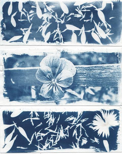flowers three part cyanotype, image in blue.