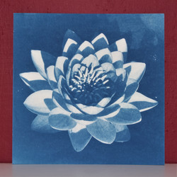 Waterlily (square)
