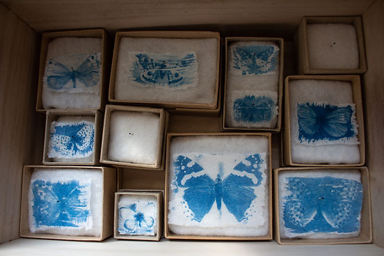 Collection of blue prints on tissue paper of moths and butterflies, each placed inside a box with pins through as specimens