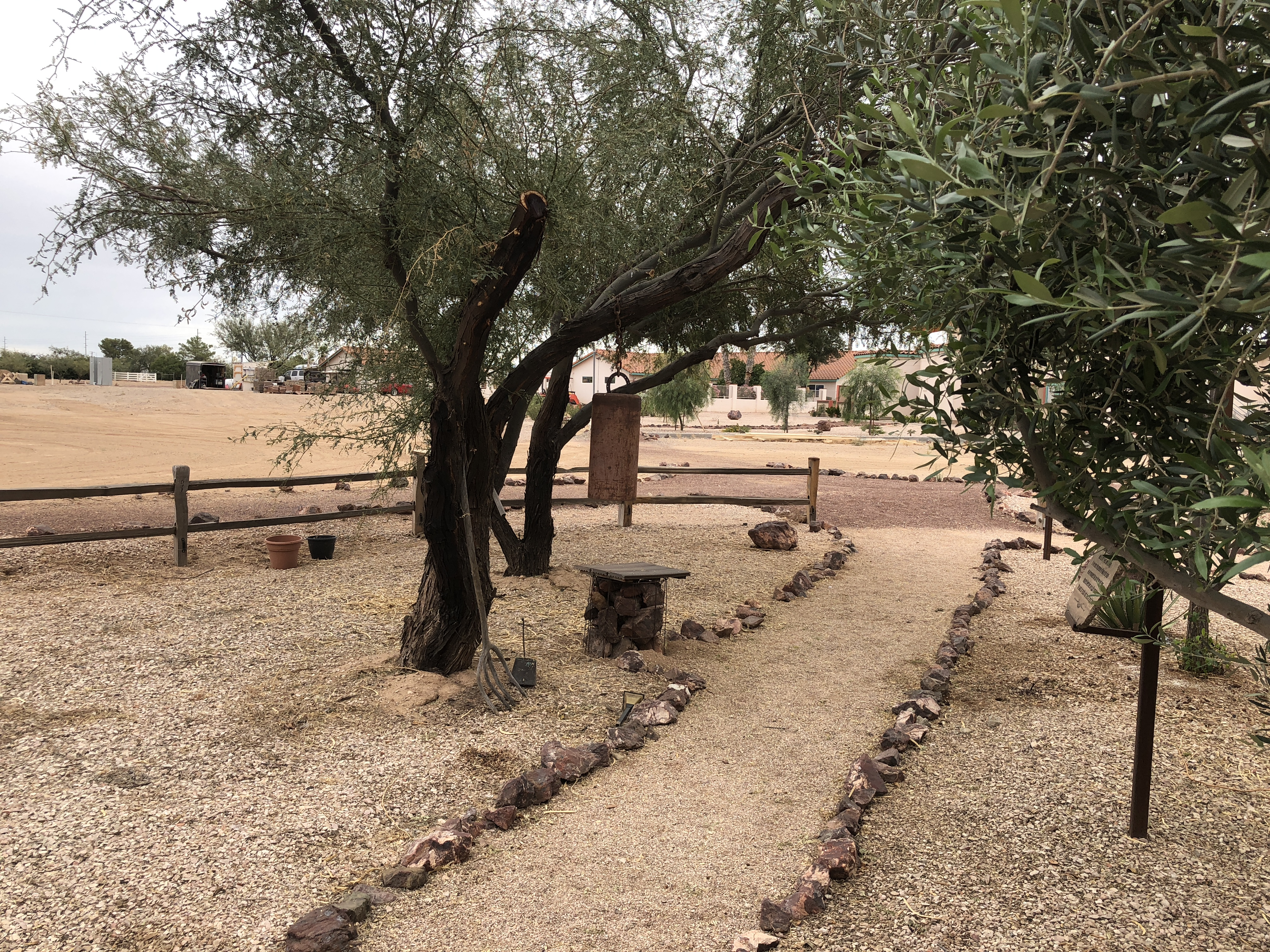 Trees in the Prayer Garden