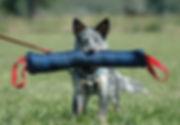Fox In Speckled Socks.jpg