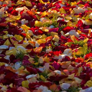 Rose Petals form this Aisle Carpet
