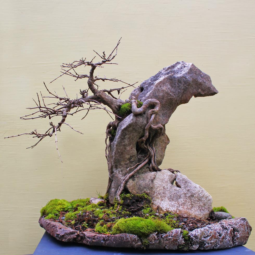 Pomegranite on rock