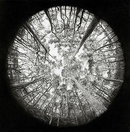 Fractal Forest WM (2).jpg