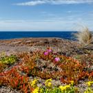 Ocean's Edge, near Greencape