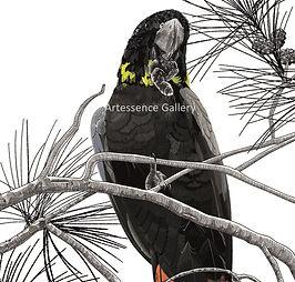 glossy female cockatoo W.jpg