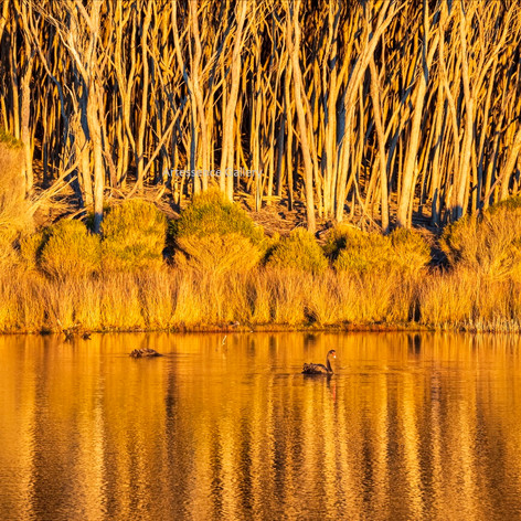 Golden Light Bournda Lagoon