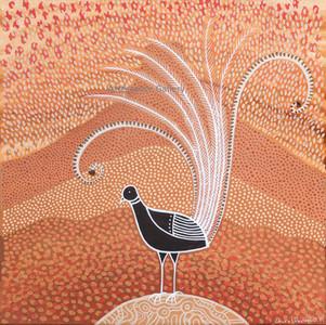 Lyre Bird