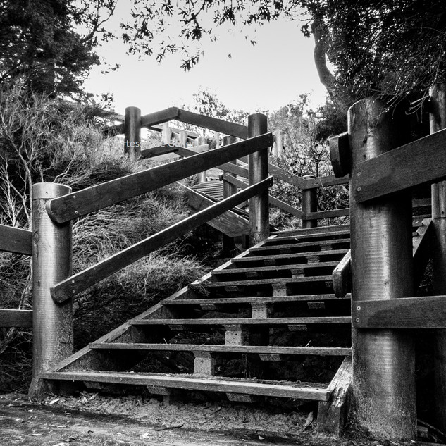 Dolphin Cove Steps