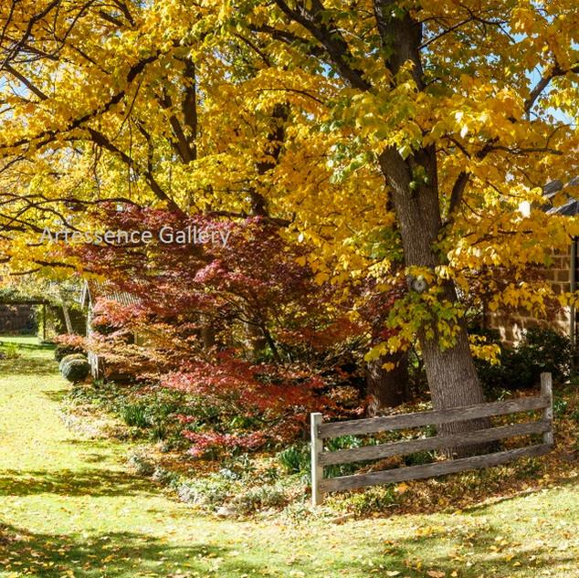 Autumn Cooma