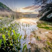 Back Lake Shortpoint