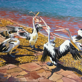 Pelicans at the Boat Ramp