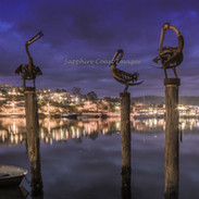 Guardians of the Town, Merimbula Pelicans