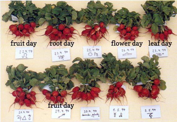 fruit-day-root-day-harvesting.jpg
