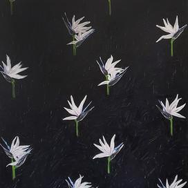Strelitzia nicolai, Oil on Canvas, 2018