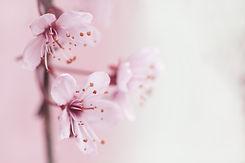 spring-2854205_1920.jpg