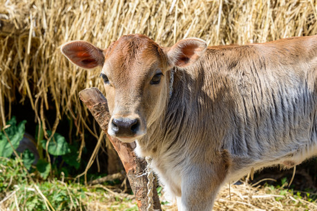Inherent Equality: to Save an Animal