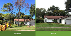 tree-removal-before-after.jpg