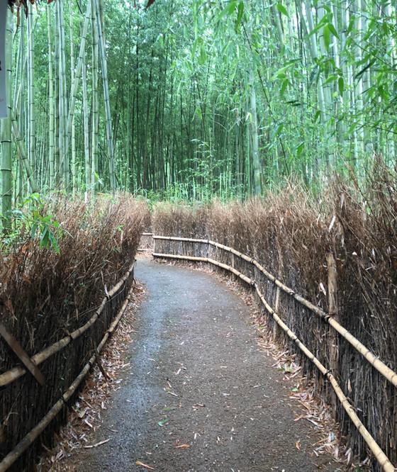 Shinrin-yoku in Japan.