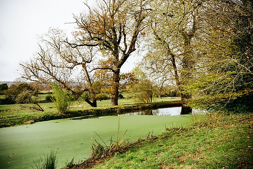 powderham gardens - two prints